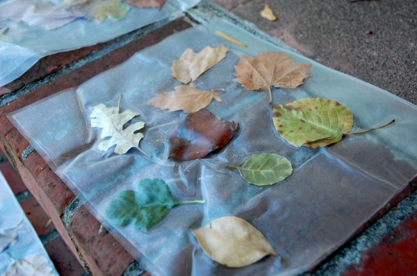 Leaf collage with contact paper for preschoolers