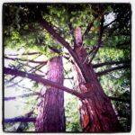 Glittery Pine Cones