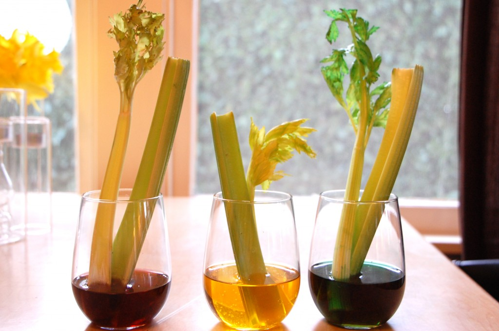 Celery Science Experiment | TinkerLab