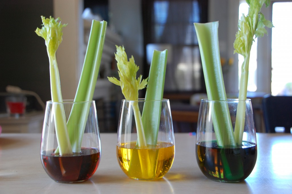 science food coloring celery experiment
