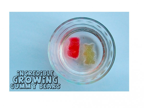 growing gummy bear.001