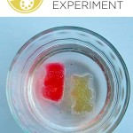 Growing Gummy Bear Experiment
