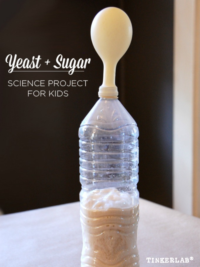 Yeast and sugar science fair project