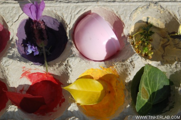 nature collection in egg carton