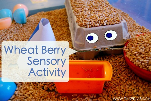 wheat berry sensory activity
