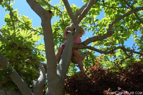 tree climbing kid