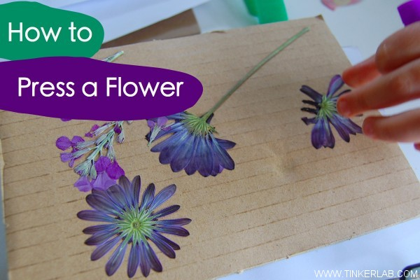 how to press a flower