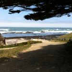 Creative Adventures: Tidepooling