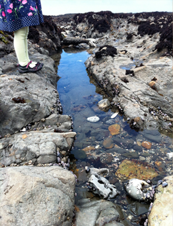 Creative adventure at the tide pool | TinkerLab