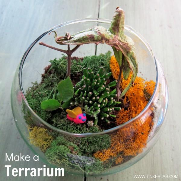 Make A Terrarium Tinkerlab