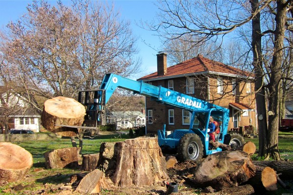 forklift moves tree stumps