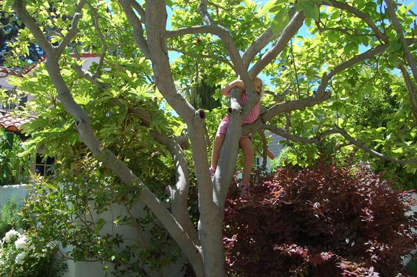 climbing trees | tinkerlab