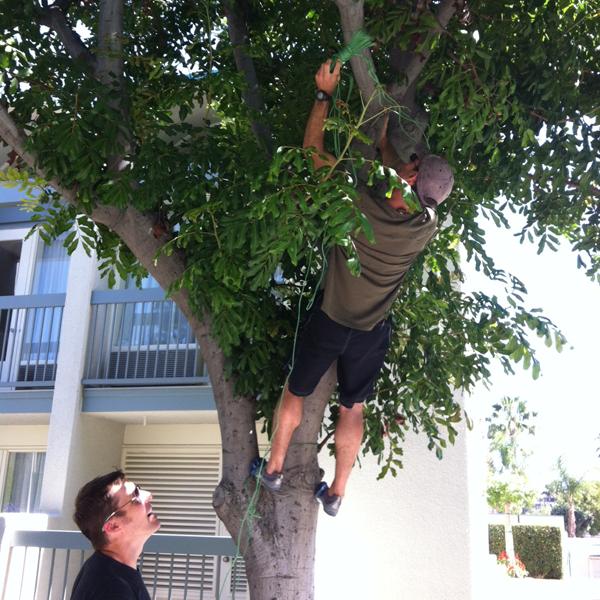 tree climbing pinata