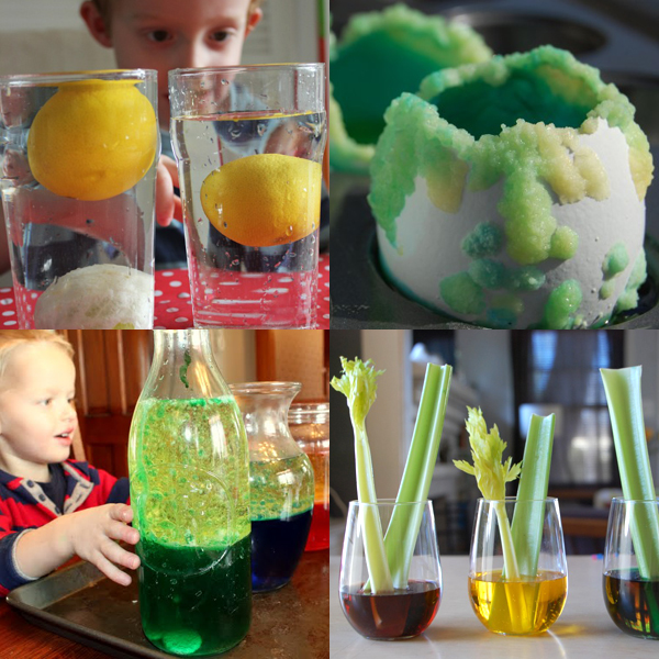 science fair experiments for kids Little kids love to see how foods can be used for the purpose of science in this  experiment, they'll play with celery and food coloring you'll just need some.