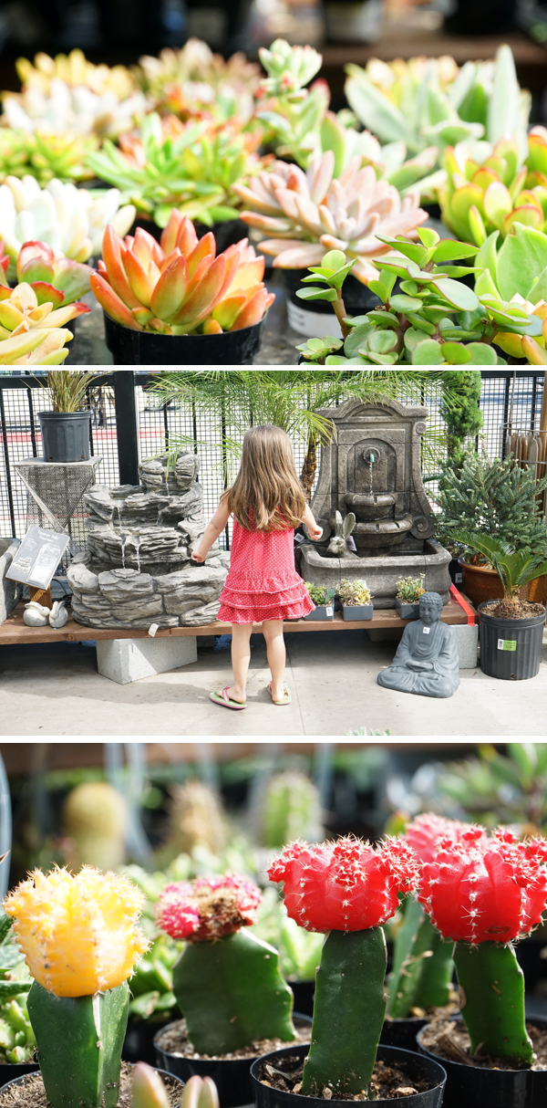 Shopping for succulents at the garden center
