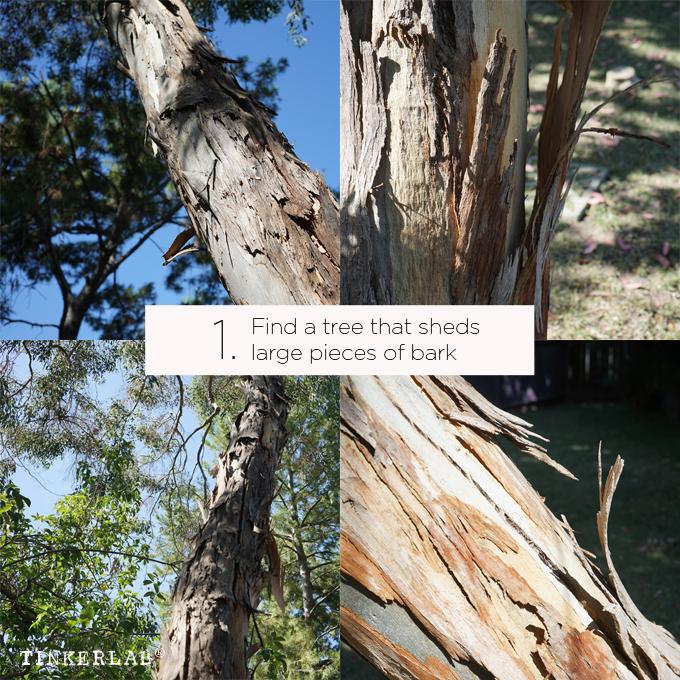 find a tree