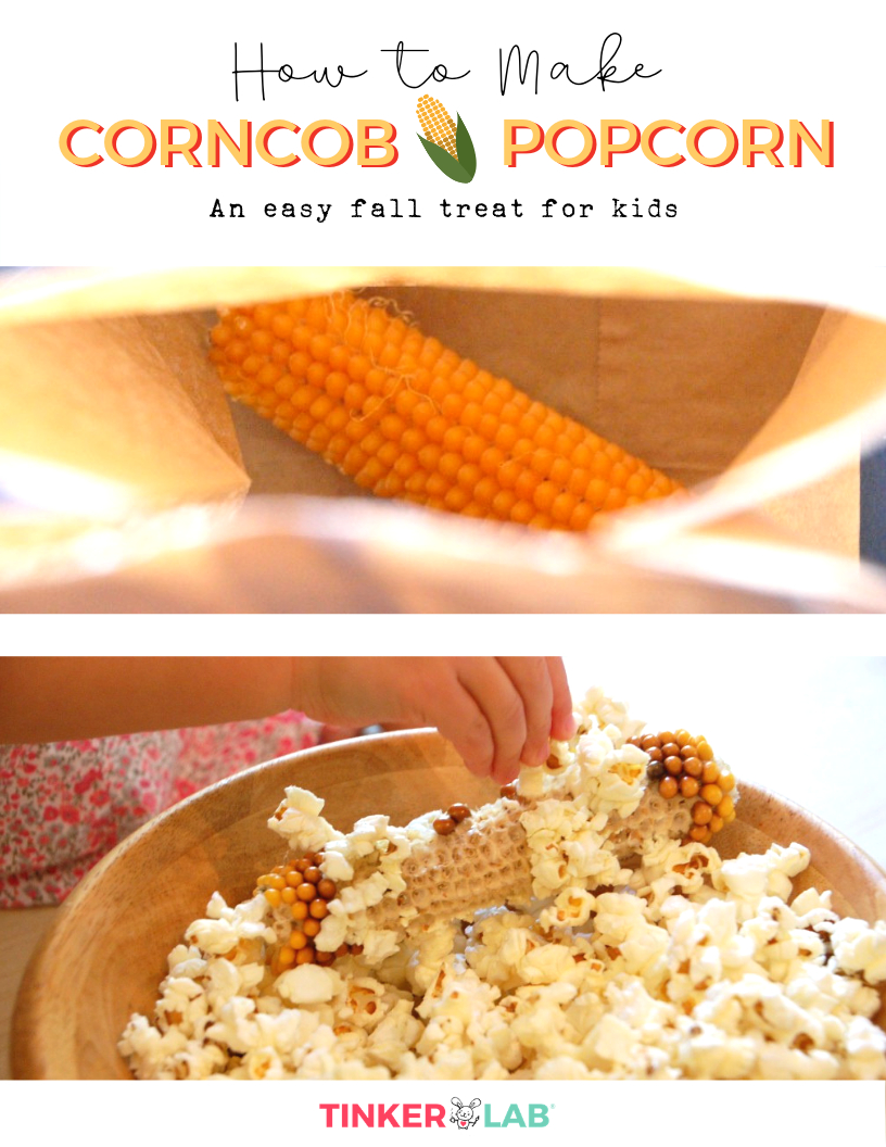 How to make corncob popcorn - an easy and fun fall treat for kids. from TinkerLab